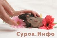Фото: Елена Богомолова
