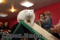Аджилити для декоративных крыс (2-2010). Фото: Татьяна Городнина