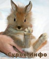 Познакомтесь —  Пасхальный заяц! (4-2010) Фото: Елена Вохмянина