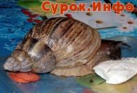 Улитка, улитка, высунь рожки!.. (1-2010) Фото: Инга Сборщикова
