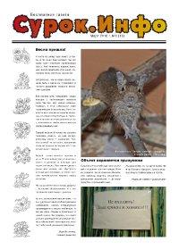 Газета Сурок.Инфо №3 (13), 2010