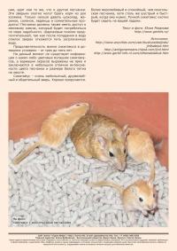 Газета СУРОК.ИНФО №1 (28), 2011 г., стр. 2