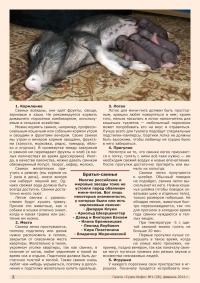 Газета СУРОК.ИНФО №1 (28), 2011 г., стр. 3