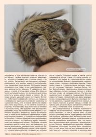 Газета СУРОК.ИНФО №1 (38), 2013 г., стр. 3