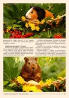 Газета СУРОК.ИНФО №1 (47), 2014 г., стр. 3