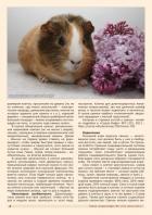 Газета СУРОК.ИНФО №1 (47), 2014 г., стр. 4