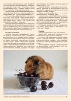 Газета СУРОК.ИНФО №1 (47), 2014 г., стр. 7