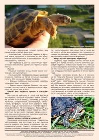 Газета СУРОК.ИНФО №2 (29), 2012 г., стр. 8