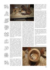 Газета СУРОК.ИНФО №3 (13), 2010 г., стр. 5
