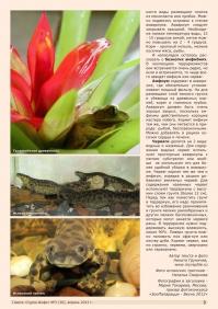 Газета СУРОК.ИНФО №3 (30), 2012 г., стр. 3
