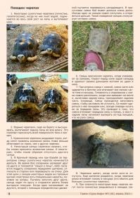 Газета СУРОК.ИНФО №3 (30), 2012 г., стр. 8