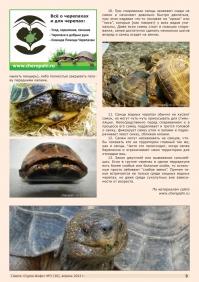 Газета СУРОК.ИНФО №3 (30), 2012 г., стр. 9