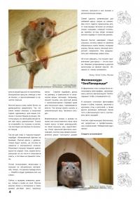 Газета СУРОК.ИНФО №4 (14), 2010 г., стр. 4