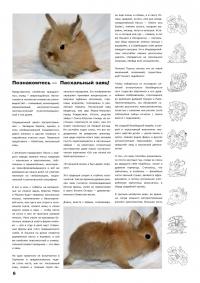 Газета СУРОК.ИНФО №4 (14), 2010 г., стр. 6