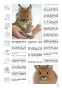 Газета СУРОК.ИНФО №4 (14), 2010 г., стр. 7