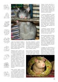 Газета СУРОК.ИНФО №4 (14), 2010 г., стр. 3