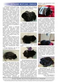 Газета СУРОК.ИНФО №5 (25), 2011 г., стр. 10