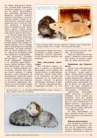 Газета СУРОК.ИНФО №5 (42), 2013 г., стр. 3