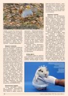Газета СУРОК.ИНФО №5 (42), 2013 г., стр. 4