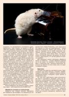 Газета СУРОК.ИНФО №5 (42), 2013 г., стр. 5