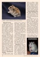 Газета СУРОК.ИНФО №5 (42), 2013 г., стр. 6