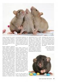 Газета СУРОК.ИНФО №6 (16), 2010 г., стр. 3