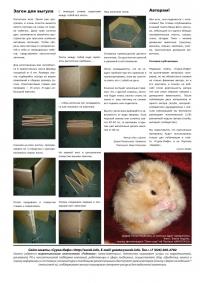 Газета СУРОК.ИНФО №6 (16), 2010 г., стр. 8