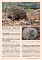 Газета СУРОК.ИНФО №6 (43), 2013 г., стр. 2