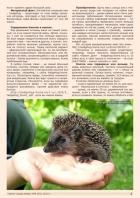 Газета СУРОК.ИНФО №6 (43), 2013 г., стр. 3