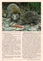 Газета СУРОК.ИНФО №6 (43), 2013 г., стр. 4