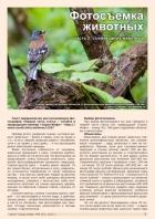 Газета СУРОК.ИНФО №6 (43), 2013 г., стр. 7