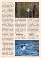 Газета СУРОК.ИНФО №6 (43), 2013 г., стр. 8