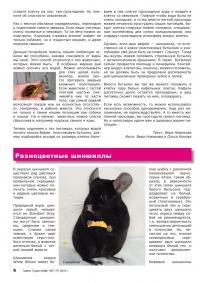 Газета СУРОК.ИНФО №7 (17), 2010 г., стр. 6