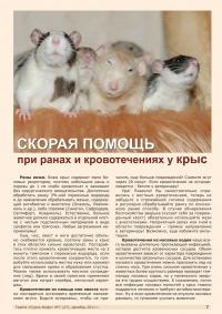 Газета СУРОК.ИНФО №7 (27), 2011 г., стр. 7