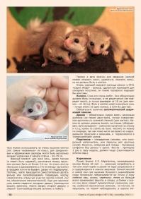 Газета СУРОК.ИНФО №7 (34), 2012 г., стр. 10