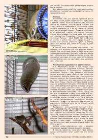 Газета СУРОК.ИНФО №7 (34), 2012 г., стр. 12