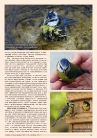Газета СУРОК.ИНФО №8 (35), 2012 г., стр. 5