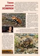 Газета СУРОК.ИНФО №8 (45), 2013 г., стр. 7