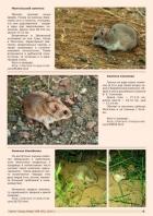 Газета СУРОК.ИНФО №8 (45), 2013 г., стр. 9