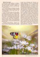 Газета СУРОК.ИНФО №9 (46), 2013 г., стр. 2