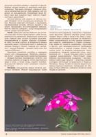 Газета СУРОК.ИНФО №9 (46), 2013 г., стр. 4