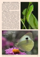 Газета СУРОК.ИНФО №9 (46), 2013 г., стр. 5