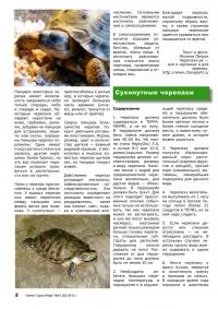 Газета СУРОК.ИНФО №10 (20), 2010 г., стр. 2