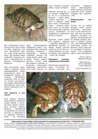 Газета СУРОК.ИНФО №11 (20), 2010 г., стр. 9