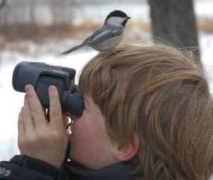 Наблюдение за дикими птицами и животными через Интернет