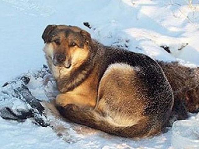 Собачья преданность: две недели пёс не отходил от замерзшей подруги