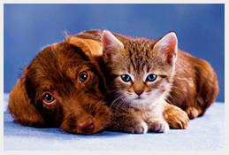 Россельхознадзор определил перечень документов, необходимых для вывоза кошек, собак и хорьков в страны ЕС