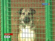 Россиян научат ответственному обращению с животными