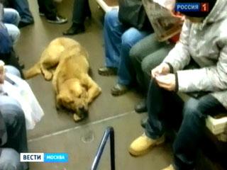 Бездомные псы ежедневно колесят по городу на метро