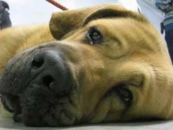 Верховный суд снял с ветеринаров обвинение за применение наркотика